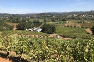Scharf vineyard